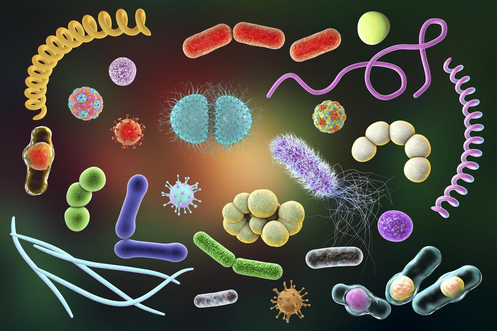 патогенная и условно-патогенная флора